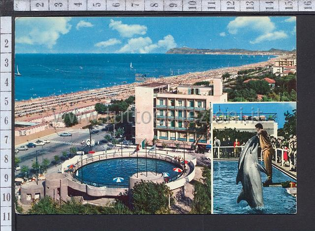 Animali cartoline postali tematiche topics postcards for Piscina i delfini